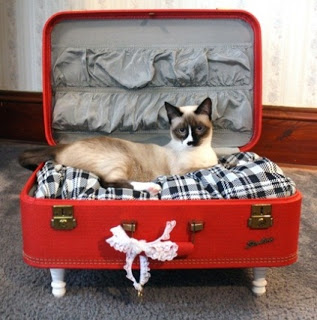 cat suitcase Haute Or Not Pets
